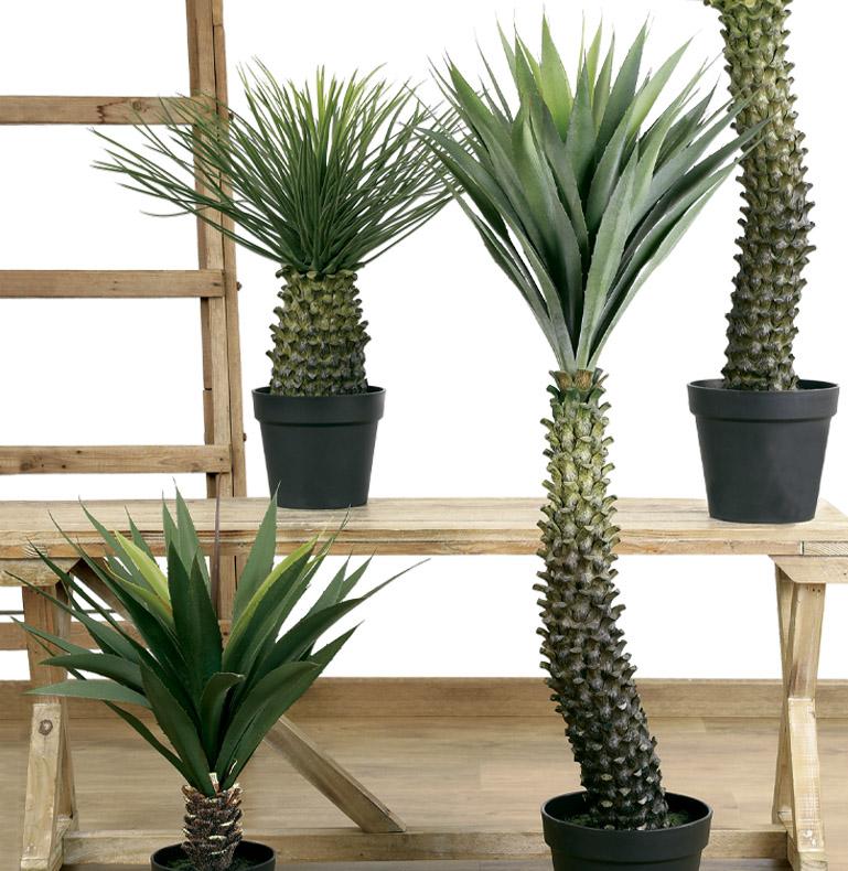 plantes succulentes et grossières