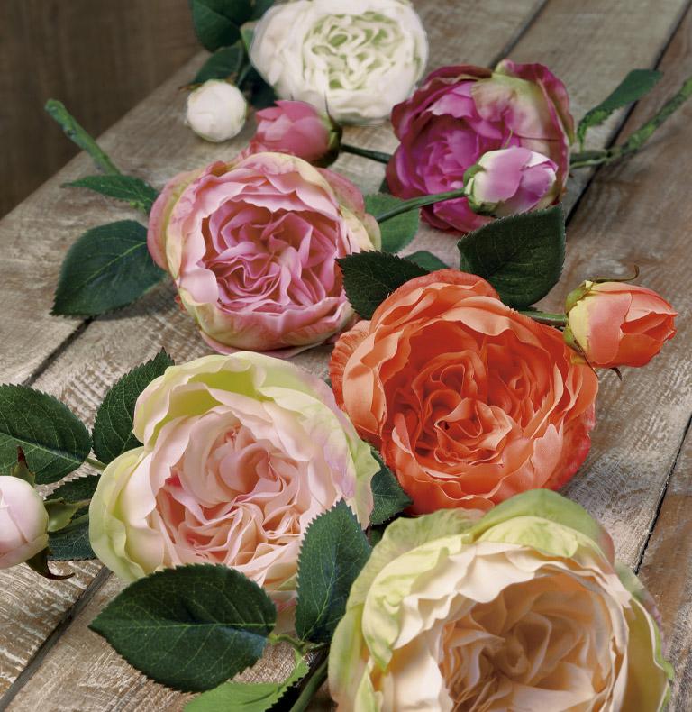 roses à tige courte