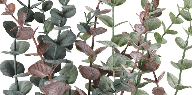 feuilles et verts