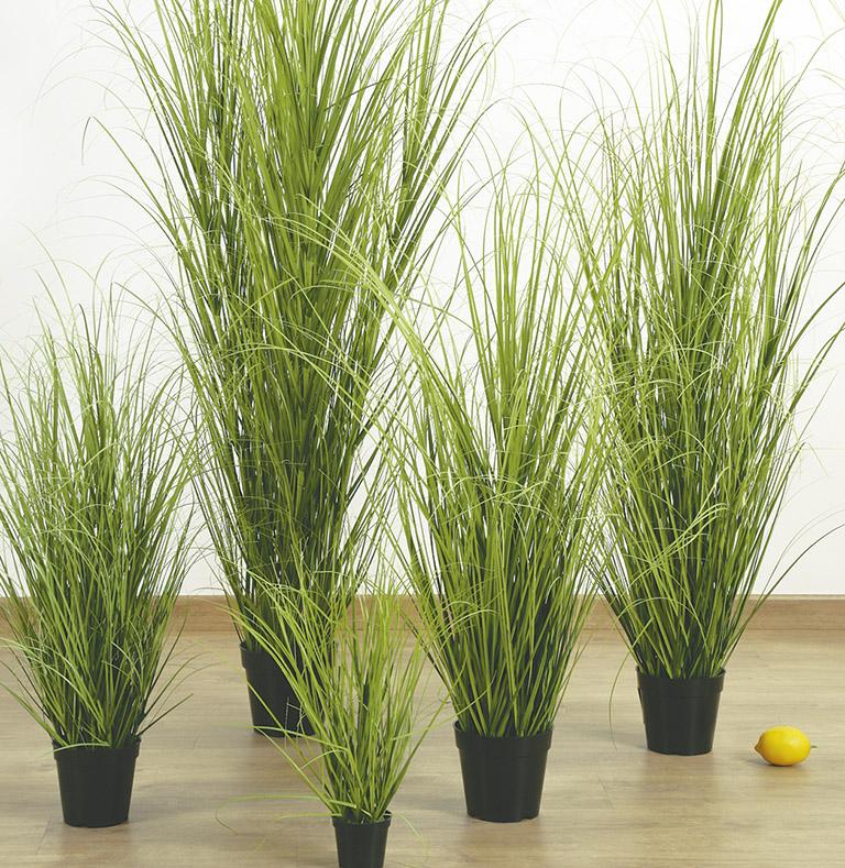 collecte d'herbe